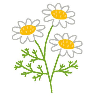 flower_chamomile