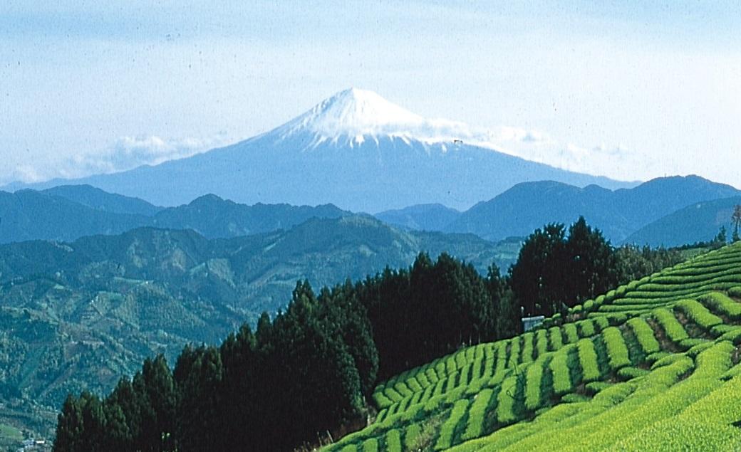茶の都🍵富士山の日イベント